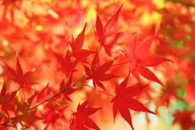 10月キャンペーン★透明美白コース『ピーリング+ライムライト』